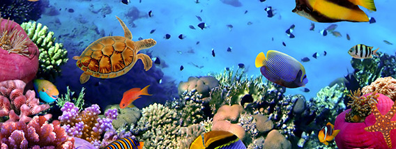 Birchwood Aquarium Under the Sea