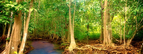 Explore the Wild Mangrove Forests of Rookery Bay