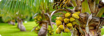 Become a Coconut Enthusiast in the West Maui Mountains