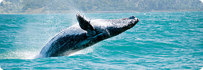 Spend the Day Whale Watching