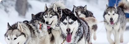 Spend a Day Dog Sledding in Skagway