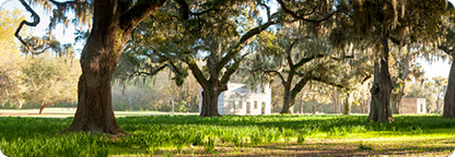 Take a Plantation Tour in Charleston, South Carolina