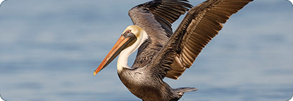 Discover the Wildlife in Palm Coast, Florida